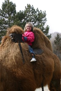 Reid riding a camel